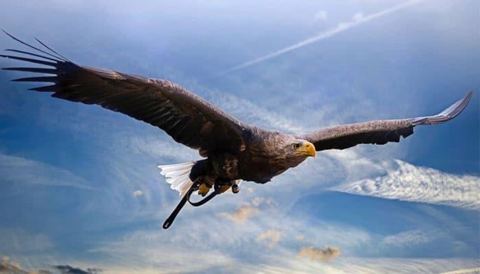 Renovación espiritual como el águila