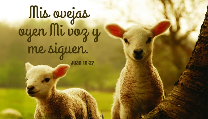 Mis ovejas oyen mi voz y me siguen