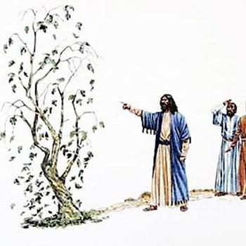 La higuera maldita por Jesús