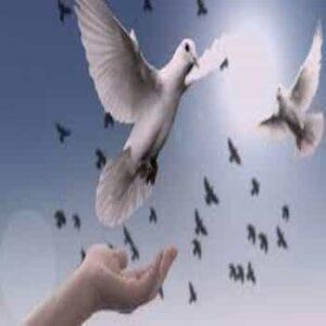 Cómo vivir días de paz