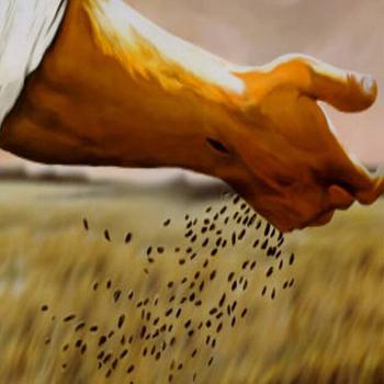 Cómo Tomar Como Ejemplo La Parábola Del Sembrador En La Iglesia